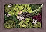 Carpentree 14''x20'' Garden Delight-Biophilic Framed Art