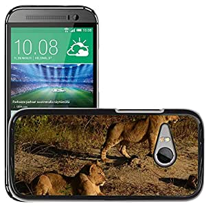Super Stella Slim PC Hard Case Cover Skin Armor Shell Protection // M00106932 Lions Animals Africa Wildlife Track // HTC One Mini 2 / M8 MINI / (Not Fits M8)