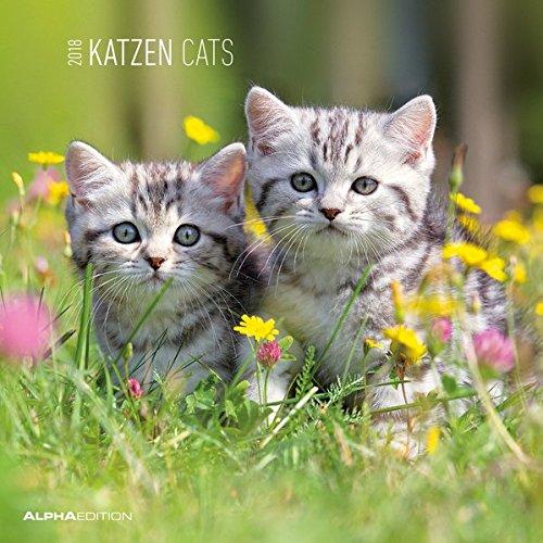 Katzen 2018 - Cats - Broschürenkalender (30 x 60 geöffnet) - Tierkalender - Wandplaner