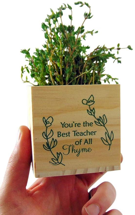 Thyme planter, teacher gift