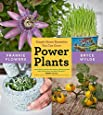 Power Plants: Simple Home Remedies You Can Grow