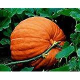 Pumpkin, Big Max pumpkin seeds, Heirloom, Organic, Non Gmo, 100 Seeds, Giant Pumpkins