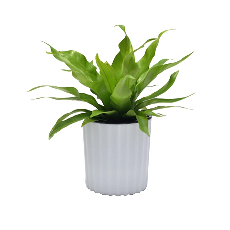 Amazoncom Large Round Modern White Table Garden Succulents Flower
