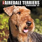 Just Airedale Terriers 2017 Wall Calendar (Dog Breed Calendars)