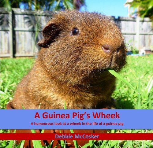 a guinea pig's wheek