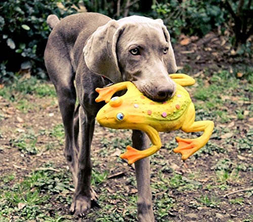 Image of Large Squeaky Frog Dog Toys. 100% Natural Rubber (Latex). Complies to Same Safety Standards as Children's Toys. Soft & Squeaky. Best Dog Toy for Large Dog.