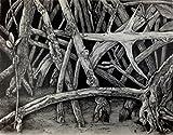 ''Mangrove IV'' Drawing by Dawn Rosendahl ~Original Pencil Drawing