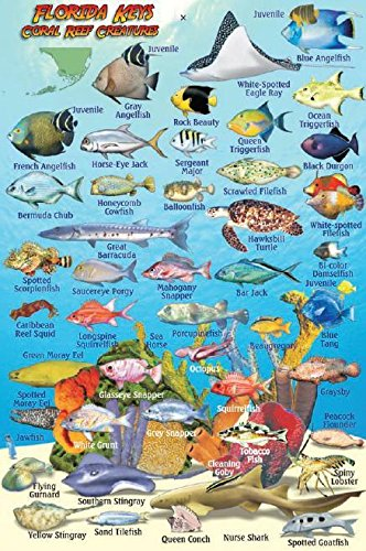 Florida Keys Reef Creatures Guide Franko Maps Laminated Fish Card 4