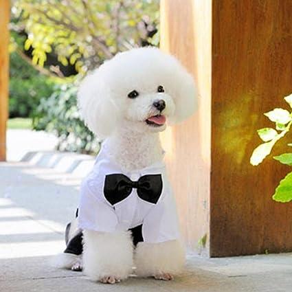 Everpert - Traje de Boda para Perro, con Corbata, Pantalones ...