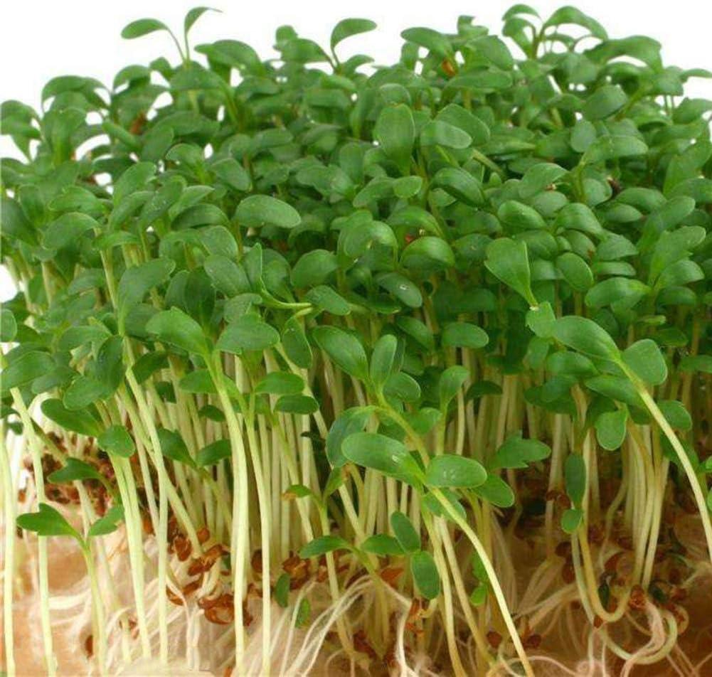 Semillas carn/ívoras Turba sustrato 4 litros Portal Cool Las Semillas del Paquete