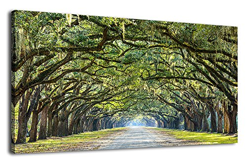 Green Trees Canvas Wall Art Nature Picture Landscape Canvas Art Forest for Home Wall Decor Large Canvas Prints of Oak Trees Lined Road at Historic Wormsloe Plantation Savannah Georgia 20
