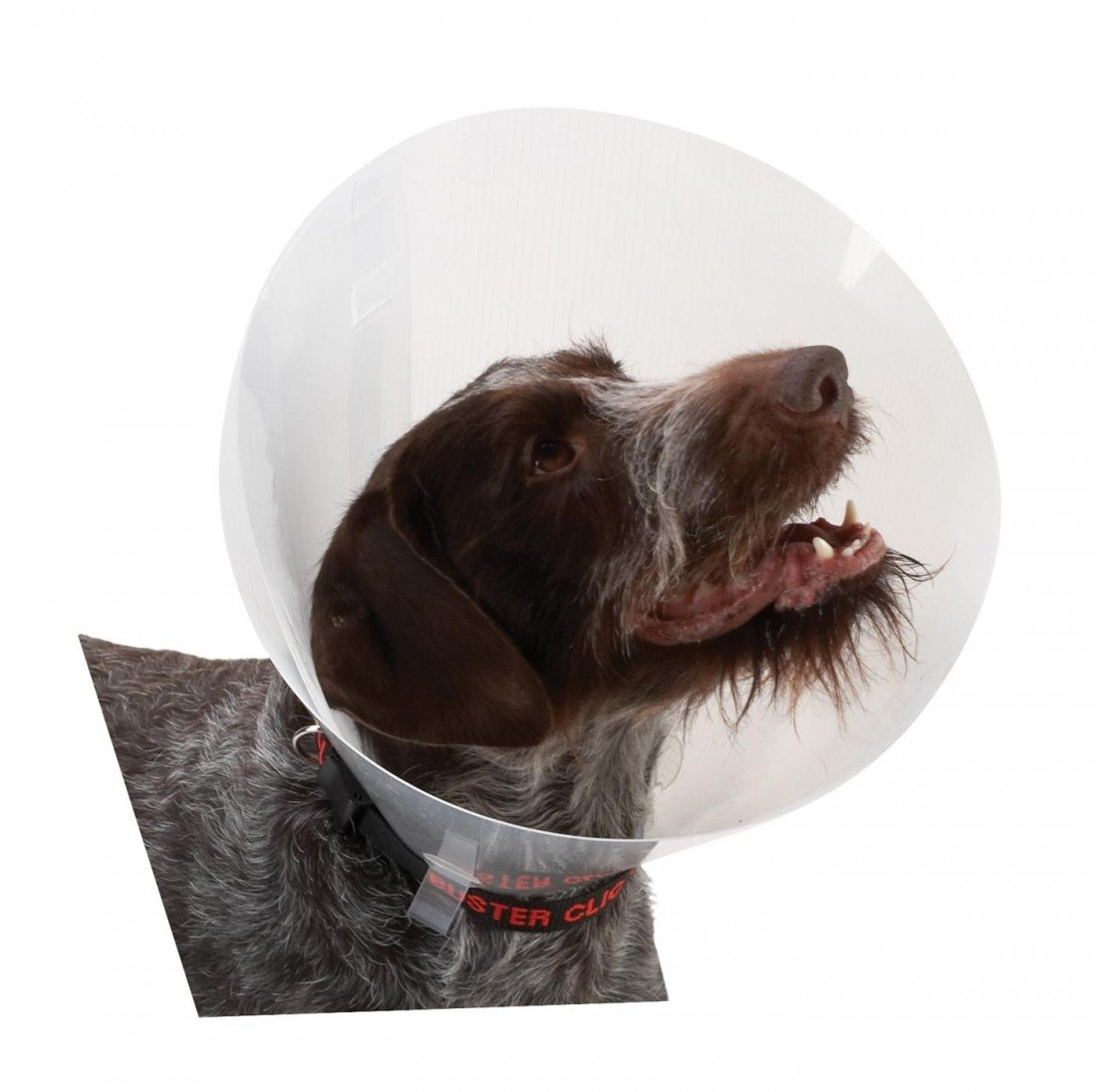 30cm Buster Classic Transparent Dog Collar, 30 cm, 10-Piece