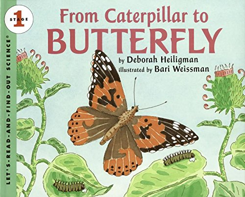 Download From Caterpillar to Butterfly Big Book (Let's-Read-and-Find-Out Science 1) PDF