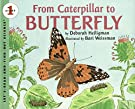 From Caterpillar to Butterfly Big Book (Let's-Read-and-Find-Out Science 1), by Deborah Heiligman