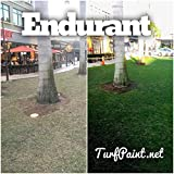 Endurant Home Lawn Blend Concentrated Colorant