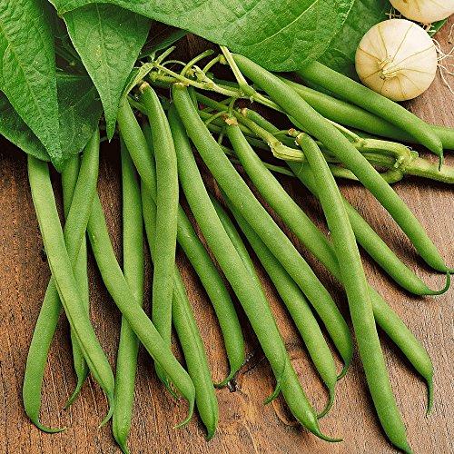 100 Kentucky Wonder Green Bush Bean Seeds - Everwilde Farms Mylar Seed Packet (Kentucky Beans Bush Wonder)