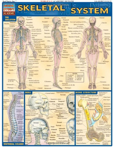 skeletal system study guide chart poster