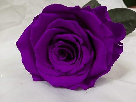 Almaflor Rosa eterna Morada. Gratis tu envío. Rosas eternas Naturales con Cabeza 6 cm