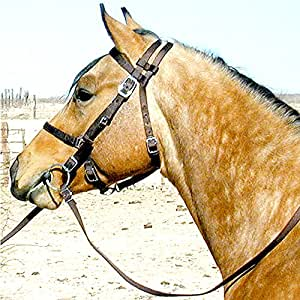 Intrepid International Nylon Halter Bridle Combo with Reins