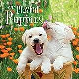 Playful Puppies 2017 Calendar