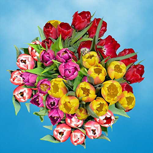 GlobalRose 30 Stems of Assorted Color Tulips Flowers - Fresh Flowers for Delivery by GlobalRose