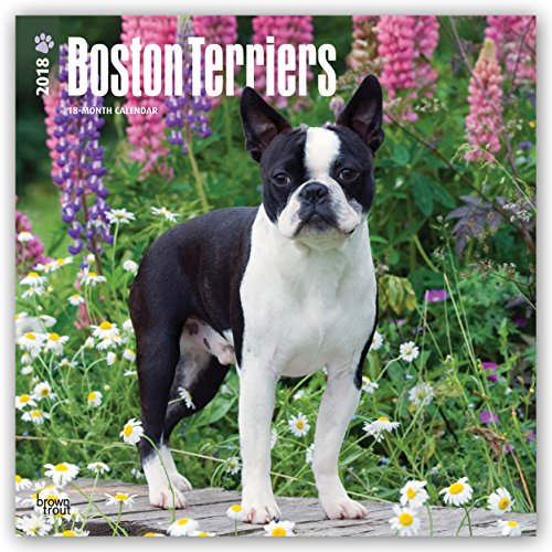 Boston Terriers 2018 12 x 12 Inch Monthly Square Wall Calendar, Animals Dog Breeds Terriers (Multilingual Edition)