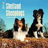 Shetland Sheepdogs 2017 Mini 7X7 (Multilingual Edition)