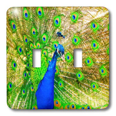 3dRose lsp/_99604/_2  Brilliant Colored Peacock Remastered Photograph Double Toggle Switch