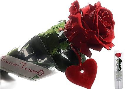 Rosen Te Amo Konservierte Echte Rote Rose über 3 Jahre Haltbar