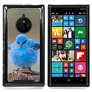 Jordan Colourful Shop - Cute Baby Pet Bird Nature Blue Ornithology For Nokia Lumia 830 - < Personalizado negro cubierta de la caja de pl??stico > -