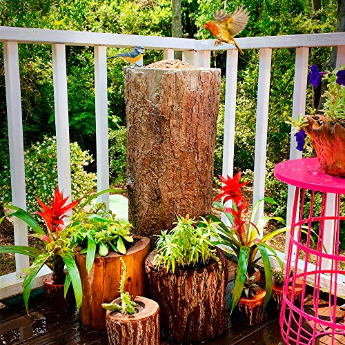 - Natures Feast  Wild Bird, Squirrrel & Critter Feeder. Tree Stand Buffet for Nature Lovers. Woodland Farmhouse Large Patio & Garden Platform Standing Seed Tray. Better Than A Pole Feeder.