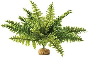 Exo Terra Terrarium Plant