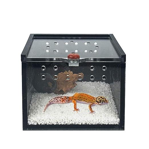 Caja de alimentación para reptiles de acrílico, para insectos ...