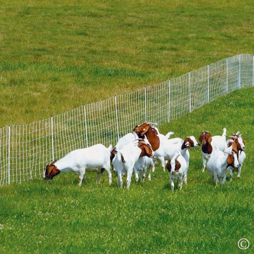 "Premier ElectroStop Goat & Sheep Electric Fence, 42""H x 164' L, Double Spike, WhitePremier Top Seller"