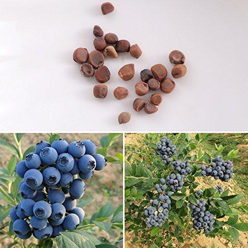 BigFamily 20pcs Blueberry Seeds Tree Plant Garden Decoration Potted Bonsai Fast Growing