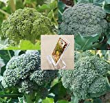 Homegrown Broccoli Seeds, 225 Seeds, Organic Broccoli Mix