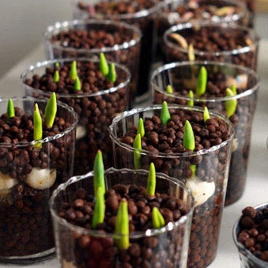 Yionloe 100pcs// Bag Rainbow Tulip Seeds Garden Flower Plant Flowers