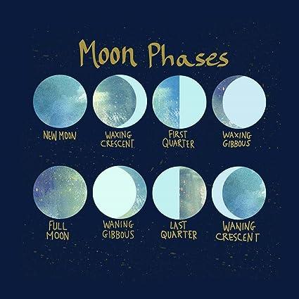 Amazon com: Moon Phases by Lisa Powell Braun Art Print, 10 x 10