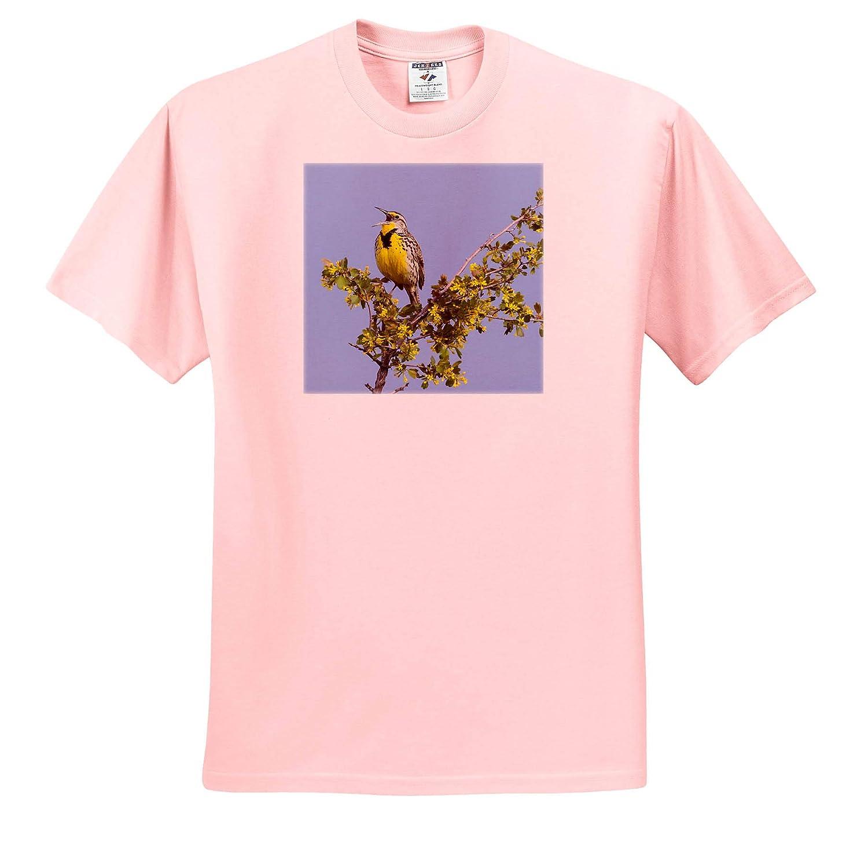 Birds 3dRose Danita Delimont Western Meadowlark Singing ts/_313969 Adult T-Shirt XL