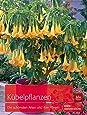 Kübelpflanzen: Die schönsten Arten und ihre Pflege