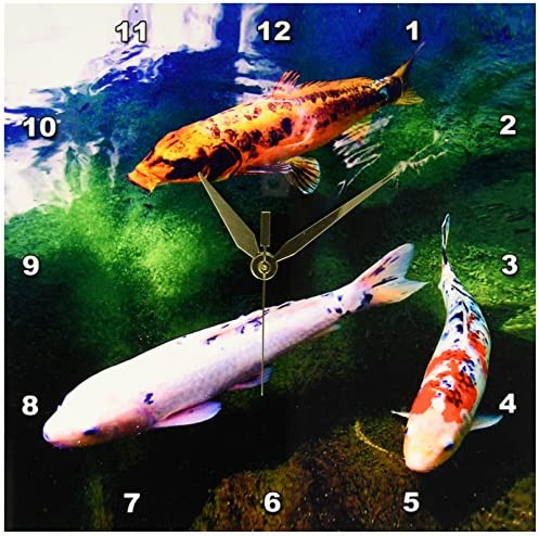 3dRose Chinese Koi Carp Fish Wall Clock, 10 by 10-Inch