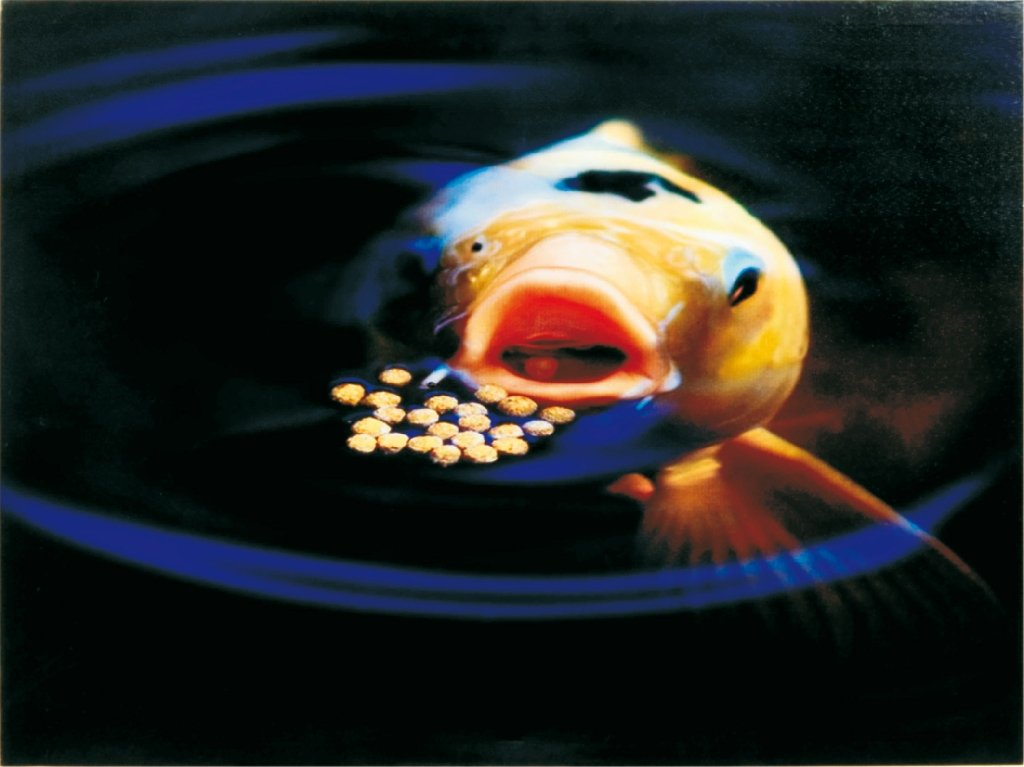 Alimento básico granulado para peces Koi, Prime 3800 g, marca Sanikoi: Amazon.es: Hogar