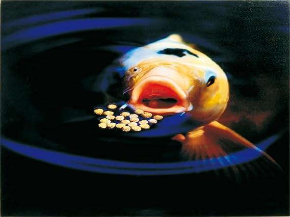Comida flotante Sanikoi Colour Hi-grow para peces de estanque, 4700 g: Amazon.es: Hogar
