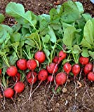 buy Cherry Belle Radish 800 Seeds - BONUS PACK! now, new 2018-2017 bestseller, review and Photo, best price $4.11