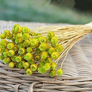 UHBGT Romantic Baby's Breath Gypsophila Dry Flower Party Home Photos Décoration 50pcs 18