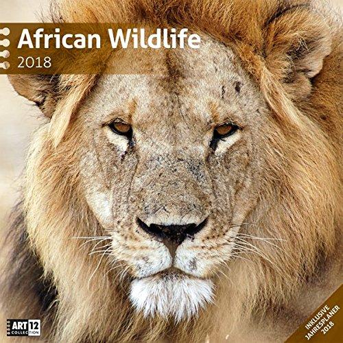 African Wildlife 30x30 2018
