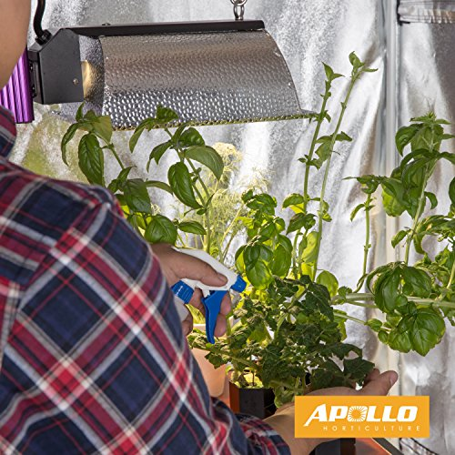 Plants grow healthily inside the Apollo Grow Tent because of the 100% light-proof material.