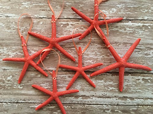 fish Christmas Tree Ornaments, 6 (Starfish Christmas Ornament)
