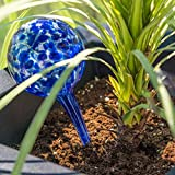 Evelots Plant Watering Globe-Glass-Automatic