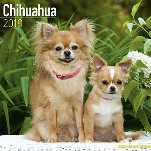 Chihuahua Calendar 2018 - Dog Breed Calendar - Premium Wall Calendar 2017-2018 (Breed Chihuahua)